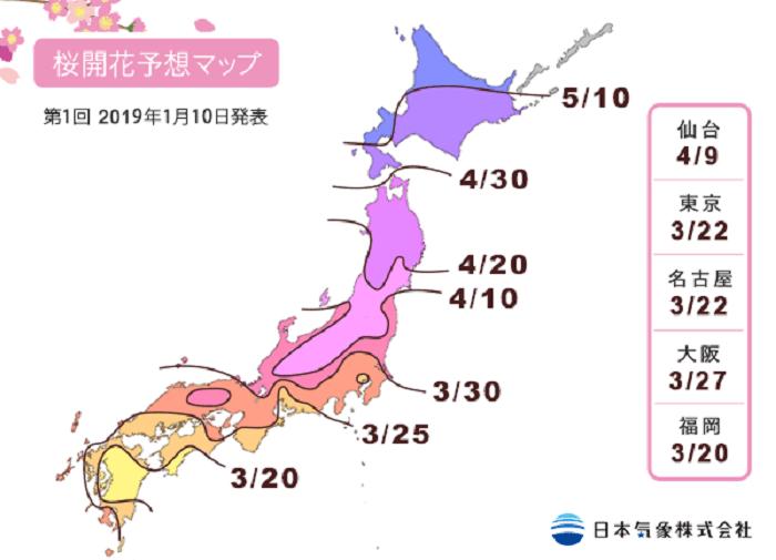 Kirsebærtræer i Japan 2019
